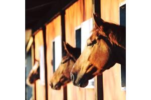 Atlı Tur Şubelerinde Doğada At Binme Temel Teknik Dersi