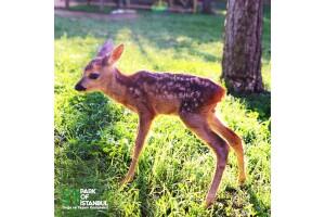 Park Of İstanbul Hayvanat Bahçesi, Piknik ve Macera Parkı Giriş Bileti